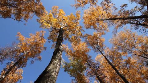 Landscape autumn Stock Video Footage