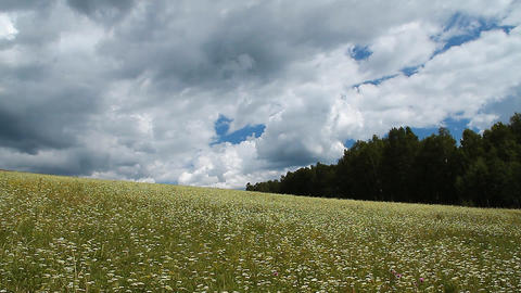 Wild Grass Footage