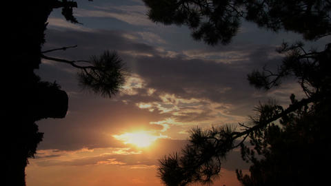 Pine And Sunset stock footage
