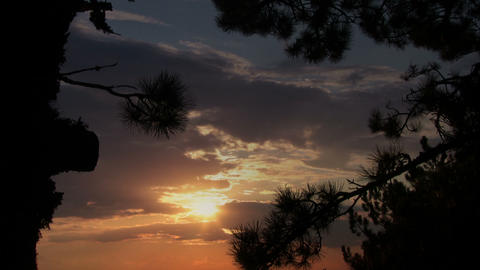 Pine and sunset Stock Video Footage