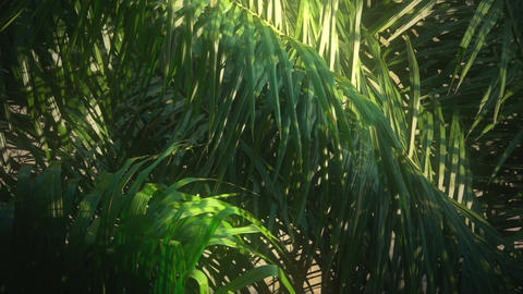 Jungle in the Morning Light Stock Video Footage
