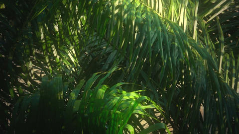 Jungle In The Morning Light stock footage