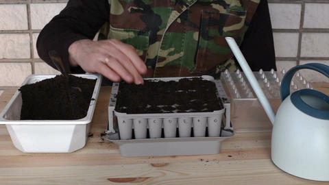 Germination of onions in nursery box 2 Footage