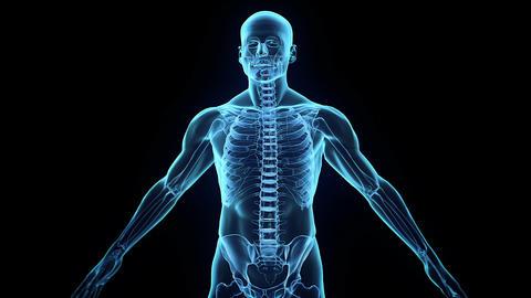 Transparent Human Body Stock Video Footage