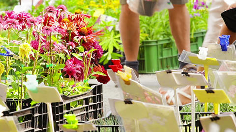 Local flower market Stock Video Footage