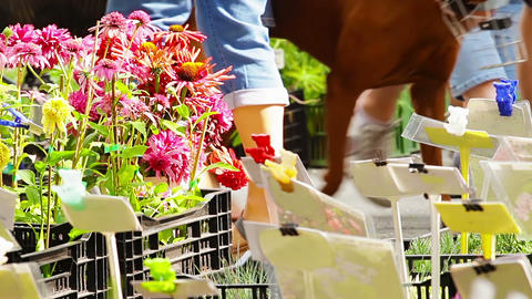 Local Flower Market stock footage