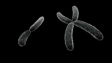Rotation Of 3D XY Chromosome.medical,micro,science,dna,microbe,helix,disease,genes,molecules,rna stock footage