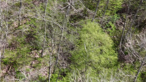 Camera moves over the forest Stock Video Footage