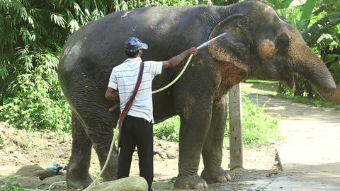 Washing the elephant Footage