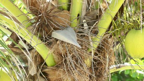Myna's nest Stock Video Footage