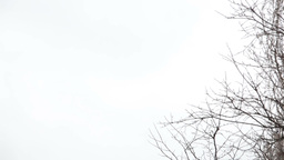Tree branches on the background of white sky Footage