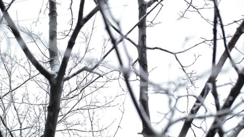 Snowfall and the trees Stock Video Footage