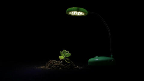 Young sprout and table lamp on a black background Stock Video Footage