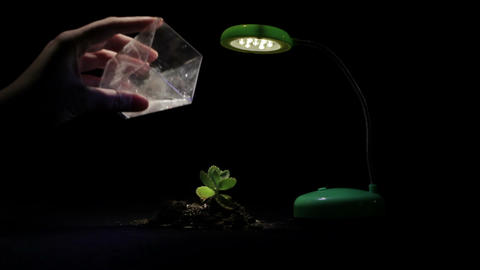 Young sprout and table lamp on a black background Footage