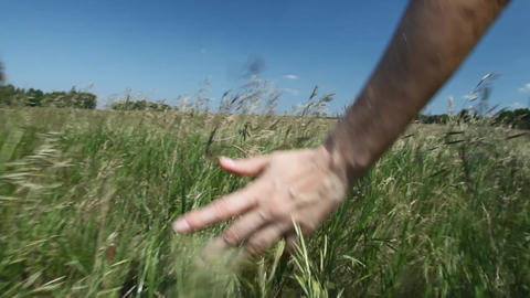 Woman Walks Across The Field stock footage