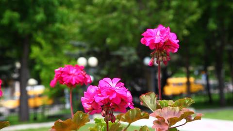 Flowers Footage