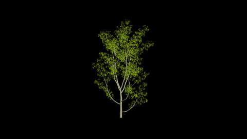 Animation Tree 1 Animation