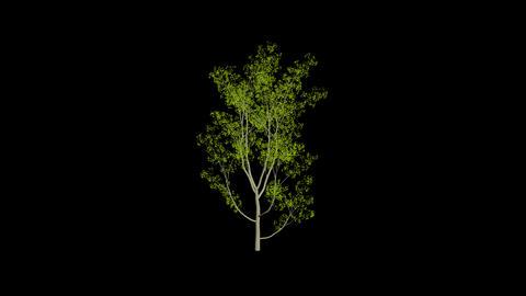 Animation Tree 1 Stock Video Footage