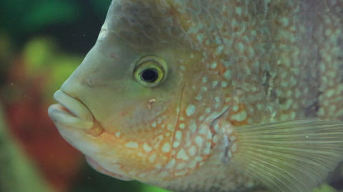 Fish in aquarium Stock Video Footage