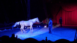 Circus Horse Stock Video Footage