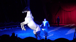 Circus Horse Footage