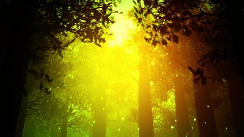 Deep Magic Forest 7 fireflies Stock Video Footage