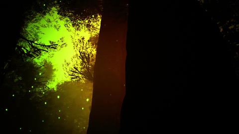 Deep Magic Forest 9 fireflies Stock Video Footage