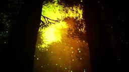 Deep Magic Forest 9 fireflies Stock Video Footage