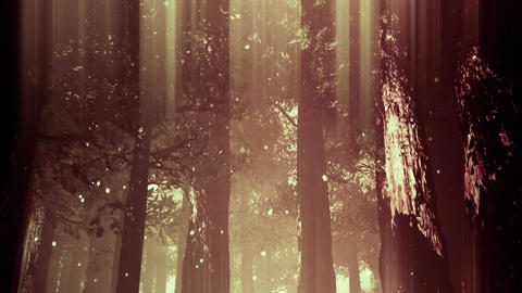 Deep Magic Forest 13 fireflies Stock Video Footage