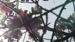 Springtime Blossoming Tree 10 Stock Video Footage