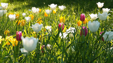 City flowers Stock Video Footage