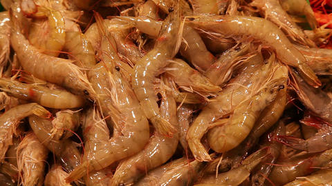 Shrimps at fish market in Barcelona, Spain Footage