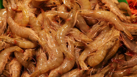 Shrimps at fish market in Barcelona, Spain Stock Video Footage