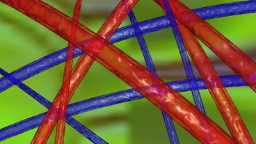 cross artery in human body Stock Video Footage