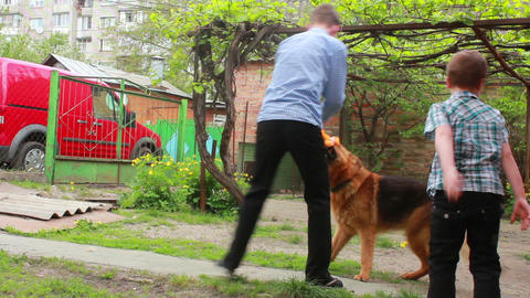 Dogs 13 Stock Video Footage