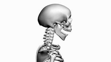 Rotation of 3D skeleton.anatomy,human,medical,body,skull,biology,medicine,scienc Animation