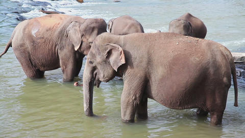 Elephants in the river Stock Video Footage
