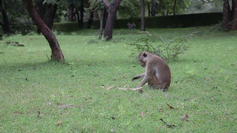 Monkey activity Stock Video Footage
