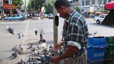 Man feed pigeons, Yangon, Myanmar Footage