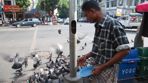 Man feed pigeons, Yangon, Myanmar Stock Video Footage