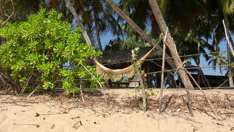 Palms and Hammock Stock Video Footage