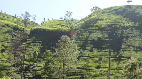 Tea plantation in Nuwara Eliya,Ceylon Footage