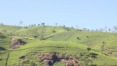 Tea Plantation In Nuwara Eliya,Ceylon stock footage