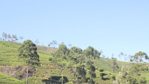 Tea plantation in Nuwara Eliya,Ceylon Stock Video Footage