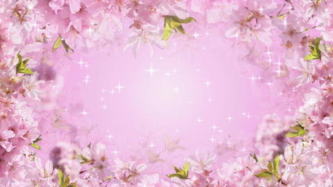 Pink Blossoms Stock Video Footage