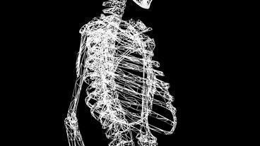 Rotation of 3D skeleton.ribs,chest,anatomy,human,medical,body,skull,biology,medi Animation