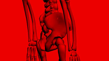 Rotation of 3D skeleton.Hip_bone,pelvis,pelvic,anatomy,human,medical,body,skull, Animation