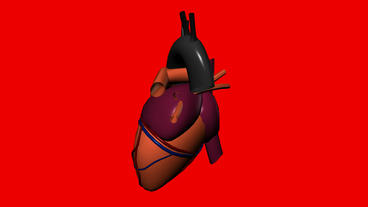 Rotation of heart.love,medical,health,pulse,medicine,care,heartbeat Animation