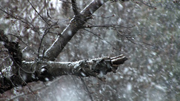 snowing slow motion Stock Video Footage
