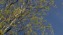 Summer tree branches Stock Video Footage